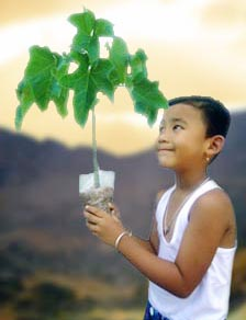 Plant A Million Tree Suigeneris